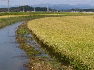 水浸しの田んぼ