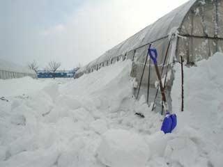 ビニルハウスの脇につもった雪