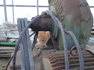 バキュームと猫