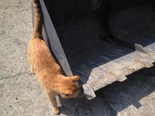 猫とバケット